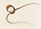 Schleime, Cornelia - Brush and India ink drawing