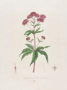 Franz de Paula von Schrank - Flora Monacensis. Bde. 2-4 in 3 Bdn.