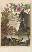 Augustin Johann Rösel von Rosenhof - Historia naturalis ranarum nostratium
