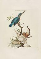 Cornelius Nozeman - Nederlandsche vogelen. 5 Bände, ungebunden in Kassetten