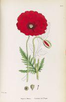 John E. Sowerby - English Botany. 11 Bände