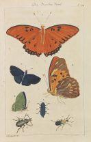 Fr. H. Wilh. Martini - Allgemeine Geschichte der Natur. 11 Bände