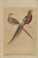Francois Nicolas Martinet - Mappe mit 23 aquarellierten Vogeldarstellungen