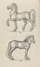 Laurentius Rusius - Hippiatria