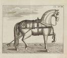Johann Gottfried Prizelius - Vollständige Pferdewissenschaft