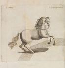 Johann Christoph Pinter von der Au - Pferd-Schatz