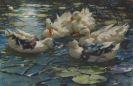 Alexander Koester - Fünf bunte Enten in blauem Seerosenwasser