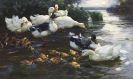 Alexander Koester - Enten mit Küken im Wasser