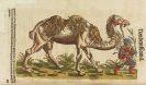 Conrad Gesner - Tierbuch, Vogelbuch, Fischbuch. 3 Tle. in 1 Band