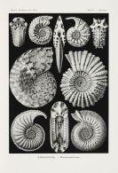 Ernst Haeckel - Kunst-Formen der Natur, 11 Lieferungen in 2 Mappen
