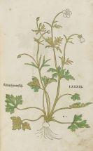 Leonhart Fuchs - New Kreüterbuch