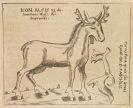 Ulrich Heinsius - Dissertatio Historico-Zoologica de Alce