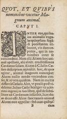 Apollonius Menabenus - Tractus de magno animali
