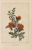 Malo, Charles - Parterre de flore