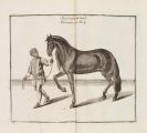 William Cavendish - Reitbahn oder vollkommener Stallmeister