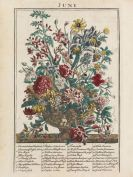 Robert Furber - Flower Garden display'd