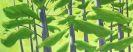 Alex Katz - White Pine 2