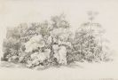 Johann Christian Reinhart - Unterholzstudie mit großen Blattpflanzen