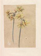 Florilegium - Fleurs du Printemps et de l´Este