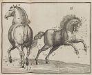 Valentin Trichter - Neu-auserlesenes Pferd-Buch. 2 Bände