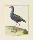 Georges Louis Leclerc Buffon - Histoire naturelle des oiseaux