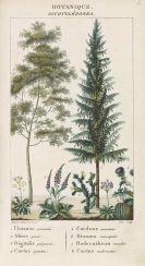 Georges Cuvier - Dictionnaire des sciences naturelles