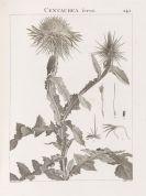 René Desfontaines - Flora Atlantica. 2 Text- und 2 Tafelbände