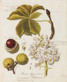 Johann Daniel Reiter - Holz-Arten