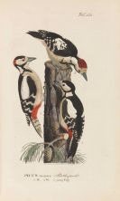 Johann Andreas Naumann - Naturgeschichte der Vögel Deutschlands