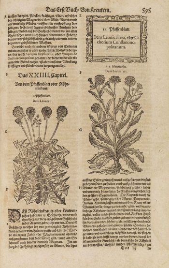 Jacob Theodor Tabernaemontanus - Neuw Kreuterbuch. 2 Bände