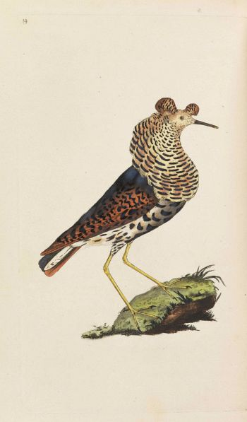 Edward Donovan - The natural history of British birds. 5 Bände