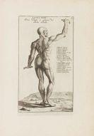 Bernardino Genga - Anatomia per uso et intelligenza del disegno