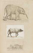 Johann Heinrich Wilhelm Tischbein - Sammlung von Einhundert und siebenzig Kupferstichen