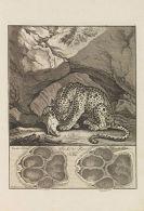 Johann Elias Ridinger - Abbildung der jagtbaren Thiere