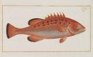 Marcus Elieser Bloch - Oeconomische Naturgeschichte der Fische Deutschlands