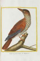Georges Louis Leclerc Buffon - Histoire naturelle des oiseaux. Band 6