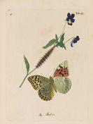Christian Friedrich Freyer - Neuere Beiträge zur Schmetterlingskunde