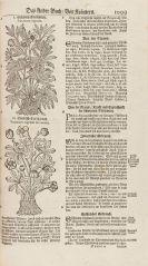 Jacob Theodor Tabernaemontanus - Neü vollkommen Kräuter-Buch