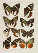 Adalbert Seitz - Die Groß-Schmetterlinge der Erde. 20 in 36 Bdn.