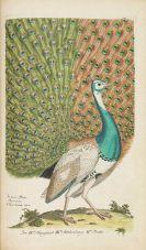 Johann Leonhard Frisch - Vorstellung der Vögel in Deutschland