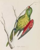 William Jardine - Illustrations of Ornithology