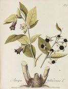 Johann Simon Kerner - Abbildung aller ökonomischen Pflanzen
