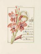 ABC - Vielfarbiges ABC  (um 1950) + Poesieband mit Monatsfolge (um 1870)