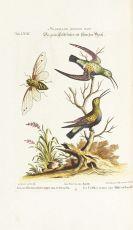 Johann Michael Seligmann - Sammlung verschiedener ausländischer und seltener Vögel, Bd. I und II