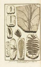 Johann Jakob Scheuchzer - Herbarium