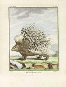 Georges Louis Leclerc Buffon - De algemeene en byzondere natuurlyke historie. 18 Bde. + Register