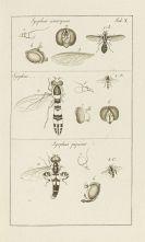 Johann Rudolf Schellenberg - Genres des mouches ... Gattungen der Fliegen - Angeb.: Land und Wasserwanzen