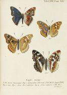Johann Christoph Esper - Schmetterlinge + Ausländische Schmetterlinge, zus. 20 Bände