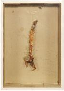 Joseph Beuys - 1a gebratene Fischgräte (Hering)