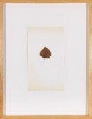 Joseph Beuys - Tilia Sinensis